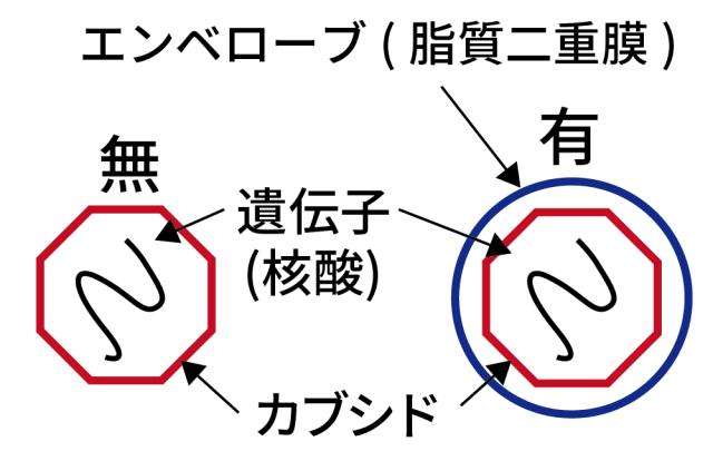 SEk抗ウイルス 構造